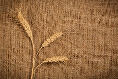 Wheat Ears over Burlap background Stock Photography