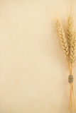 Wheat ears on paper Royalty Free Stock Photos