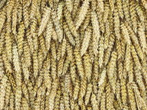 Wheat ears pattern Royalty Free Stock Photography