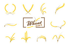 Wheat ears or rice icons set. Agricultural symbols isolated on w Royalty Free Stock Images