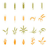 Wheat ears or rice icons set. Royalty Free Stock Photo