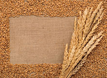 Wheat ears on sacking Stock Image