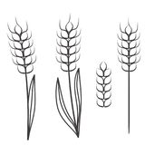 Wheat ears scretch isolated on white, stock vector illustration vector illustration