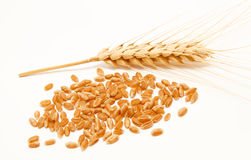 Wheat ears and seed isolated on a white Stock Photography