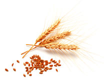 Wheat ears and seed isolated on a white Stock Photos