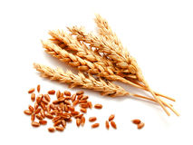 Wheat ears and seed isolated on a white background Royalty Free Stock Images