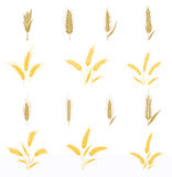 Wheat ears and seed. Royalty Free Stock Images