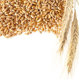 Wheat ears with seeds Royalty Free Stock Images