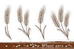 Wheat ears set Stock Image