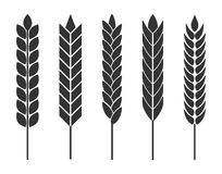 Wheat ears. Set of vector icons for organic agricultural product Stock Image