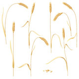 Wheat Ears Set on White Stock Photography