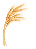 Wheat ears with space for text. EPS 10 Royalty Free Stock Image
