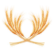 Wheat ears with space for text. EPS 10 Royalty Free Stock Photos