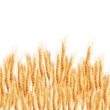 Wheat ears with space for text. EPS 10 Royalty Free Stock Photography