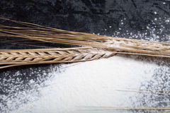 Wheat ears and sprinkle flour on black background Royalty Free Stock Photo