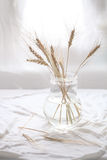 Wheat Ears in transparent vase Stock Image