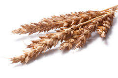 Wheat ears (Triticum spp), clipping paths. Wheat ears (Triticum spp). Clipping paths, ears and shadow separated, infinite depth of field. Design element Stock Photo