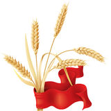 Wheat ears tuft and ribbon. Wheat ears tuft with red ribbon isolated on white Stock Photo