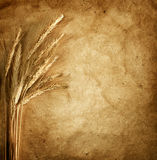 Wheat ears on vintage background Royalty Free Stock Image