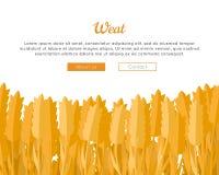 Wheat Ears Web Template in Flat Design. Stock Photos