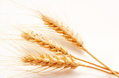 Wheat ears  on a white Royalty Free Stock Photography