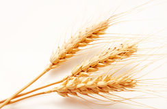 Wheat ears  on a white Royalty Free Stock Photo
