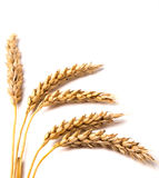 Wheat ears. On the white background Royalty Free Stock Images