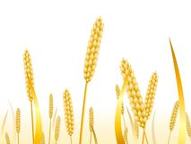 Wheat ears on a white background for landscape royalty free illustration