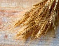 Wheat ears Stock Photography