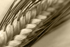 Wheat eat Royalty Free Stock Photo