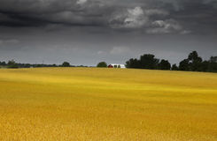 Wheat farm Stock Photos