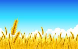 Wheat Farm. Illustration of landscape of golden wheat farm Stock Images
