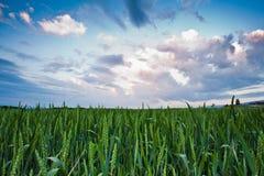 Wheat Farm and Cloudscape Stock Photo