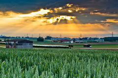Wheat Farm and Cloudscape. Wheat farm view of sunrise with sunrays breaking through the clouds Stock Photo