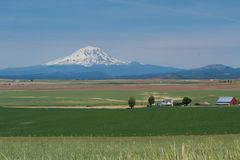 Wheat Farm in Eastern Washington Valley Agriculture with Mount Rainier Royalty Free Stock Photography