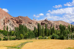 Wheat farming at Ladakh Royalty Free Stock Images