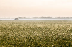 Wheat feilds Royalty Free Stock Photos