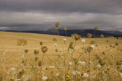 Free Wheat Field Stock Images - 10120124