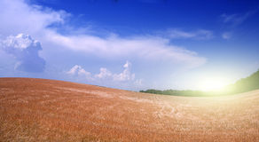 Wheat Field. And bright sun Stock Image