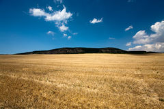 Wheat field. Stubble in Crimea, Ukraine Stock Images