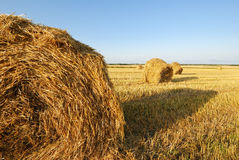 Wheat field. Ripe wheat field, agriculture, harvest Royalty Free Stock Photography