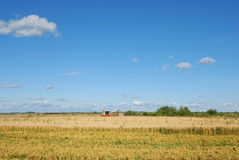 Wheat field. Ripe wheat field, agriculture, harvest Stock Photo