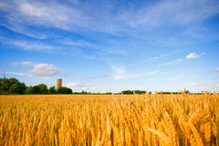 Free Wheat Field Stock Photos - 12082403