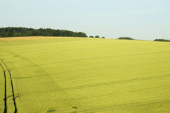 Wheat field. S in Spring in the Morvan range. France royalty free stock images