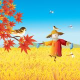 Wheat field. Prairie wheat field and blue sky vector illustration