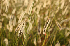 In a wheat field Stock Image