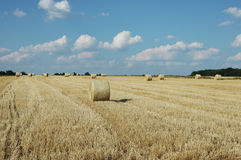 Wheat field. A golden color wheat field with hay rolls Royalty Free Stock Image