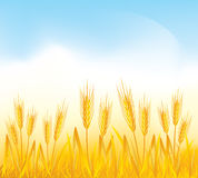 Wheat field. Vector illustrated golden whead field Royalty Free Stock Image