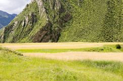 Wheat field. A large aera of wheat field in a mountain area Stock Photo
