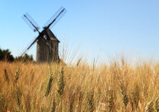 Wheat field. Out of focus image of a traditional wooden windmill seen through a wheat field Royalty Free Stock Images